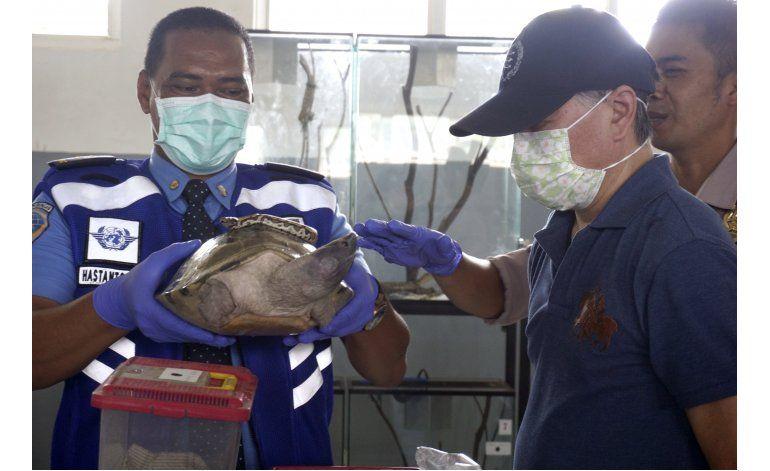 Indonesia arresta japonés por contrabando de vida silvestre