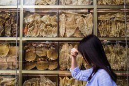 la totoaba, el pez mexicano cuya vejiga es tan valiosa que la llaman la cocaina acuatica