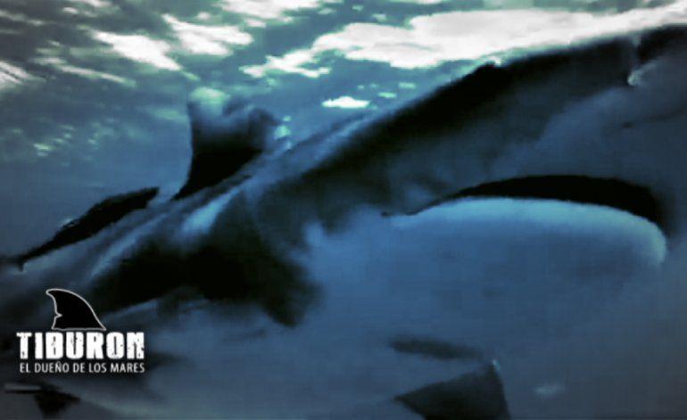 Tiburón: El dueño de los mares