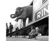 el circo ringling bros. baja el telon despues de 146 anos