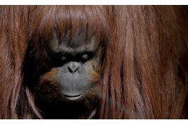 cierra zoologico de buenos aires, animales siguen enjaulados
