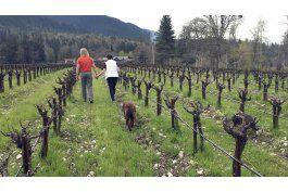 vino y hierba: vinedos de oregon tambien producen marihuana