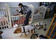 mujer peruana crea un hogar para 70 perros abandonados