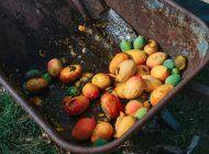 se pudren 2600 toneladas de mango en cuba por falta de envases