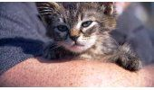 Hombre rescata a gatito pegado a una carretera