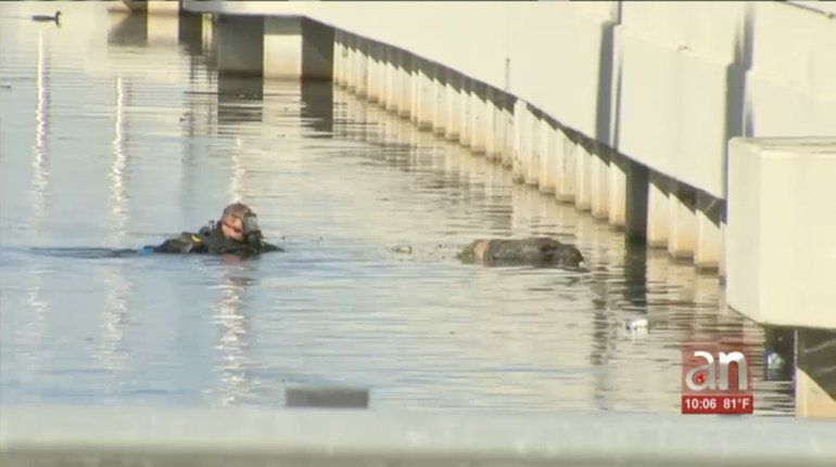 Encuentran un cadaver flotando en un canal de Hialeah