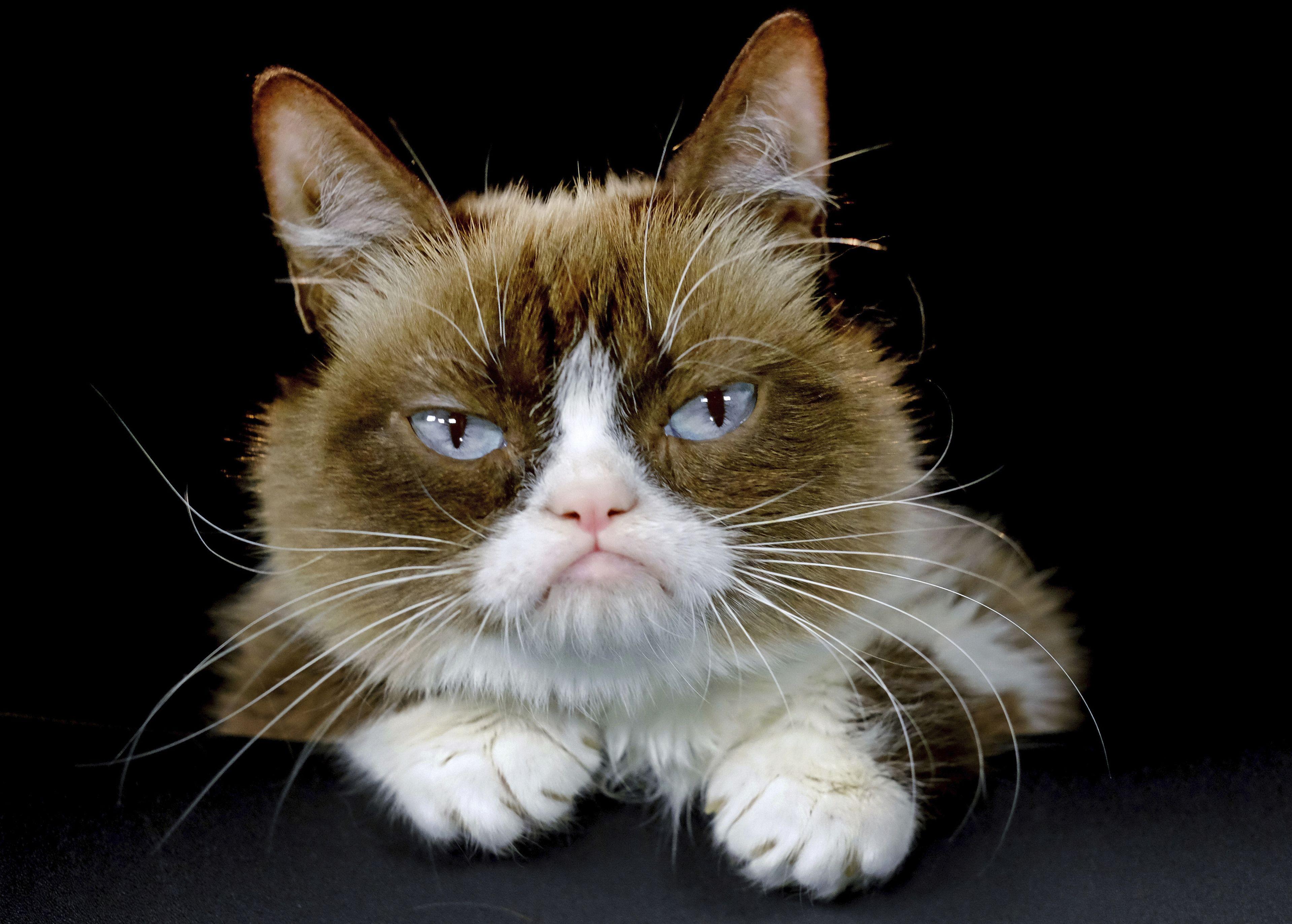 "Fallece ""Grumpy Cat"", gata que causó sensación en las redes"