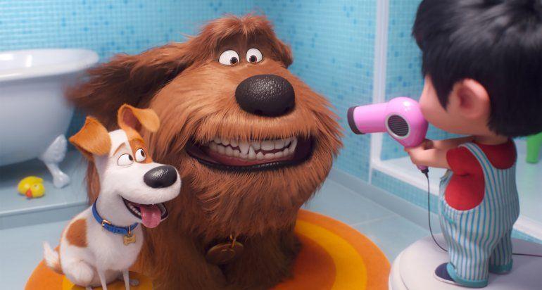Derbez, Treviño y Dupeyrón cuentan secretos de sus mascotas