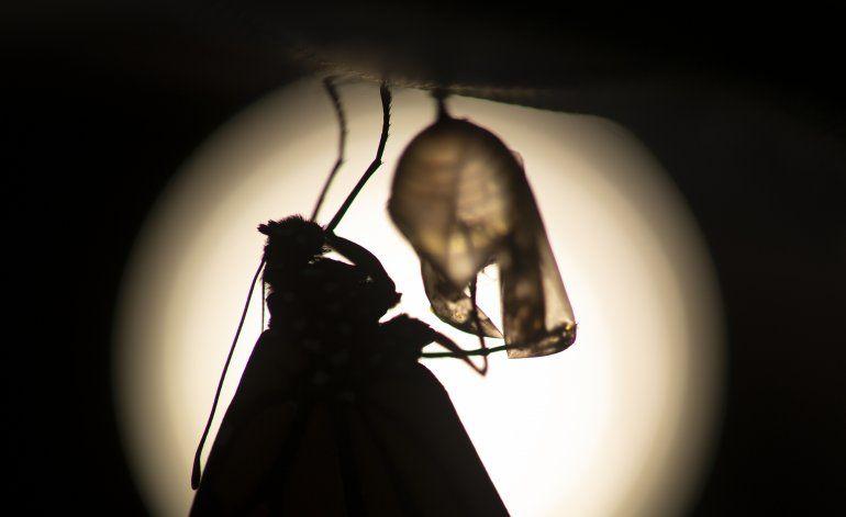 Cambios a ley en EEUU podría poner en peligro a la monarca