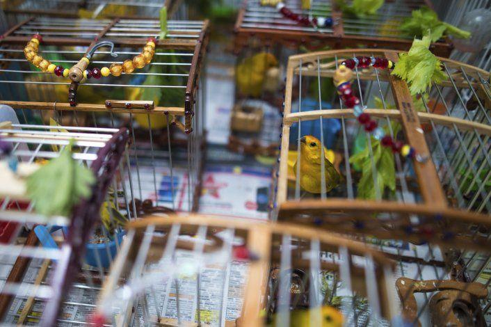 Colombia combate tráfico de fauna, silencia torneos de aves