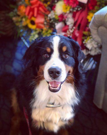 Perra de funeraria es la buena ciudadana canina 1 millón