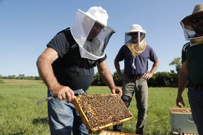 Las facultades terapéuticas de... las abejas