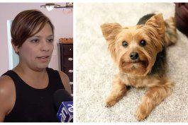 residentes de una casa del sw de miami estan desesperados tras el robo de su mascota