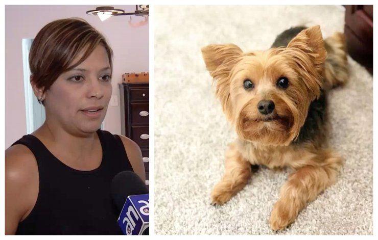 Residentes de una casa del SW de Miami están desesperados tras el robo de su mascota