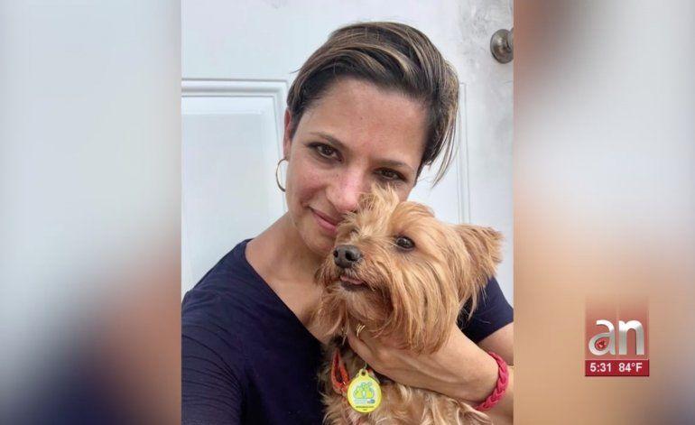 Aparece el Yorkshire Terrier robado por ladrones en una casa de Miami