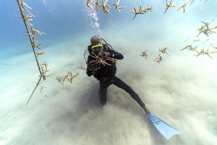 Alentadora recuperación de arrecifes corales de Jamaica