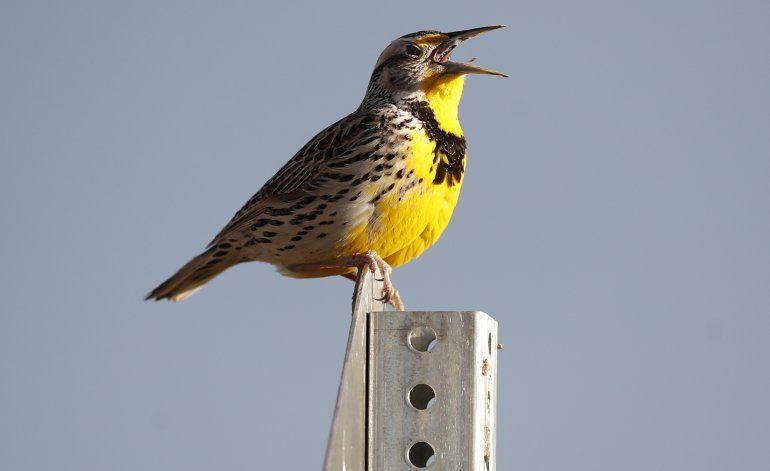 Hay 3.000 millones de aves silvestres menos en Norteamérica