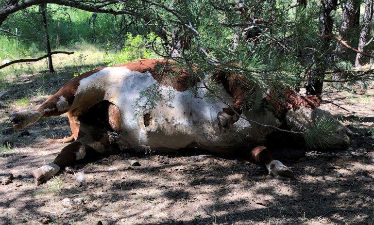 Se registran 5 extrañas muertes de toros en Oregon