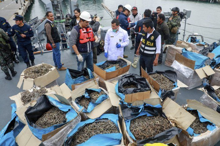 Perú: Incautan 12,3 millones de caballitos de mar secos