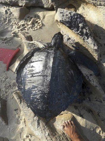 Brasil: Toneladas de petróleo derramadas en costa noreste