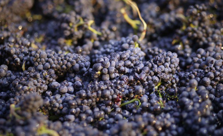 California prohíbe pesticida vinculado a lesiones cerebrales