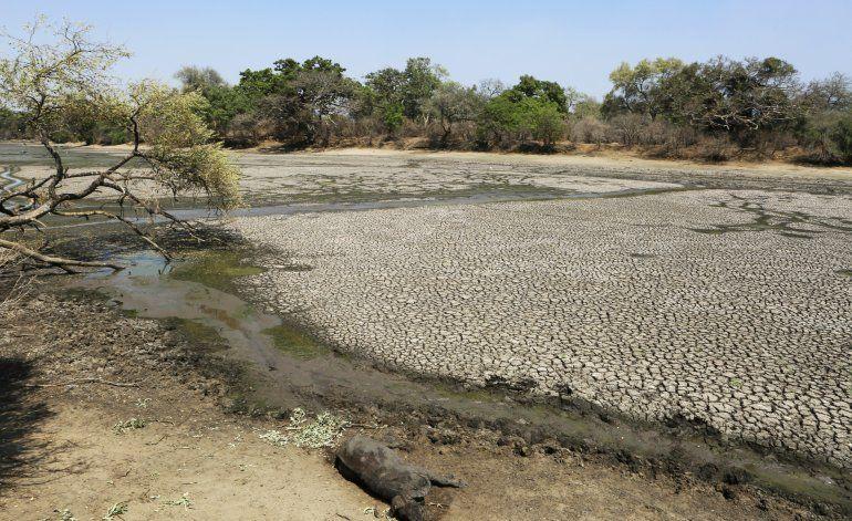 Grave sequía mata a elefantes y otras especies en Zimbabue