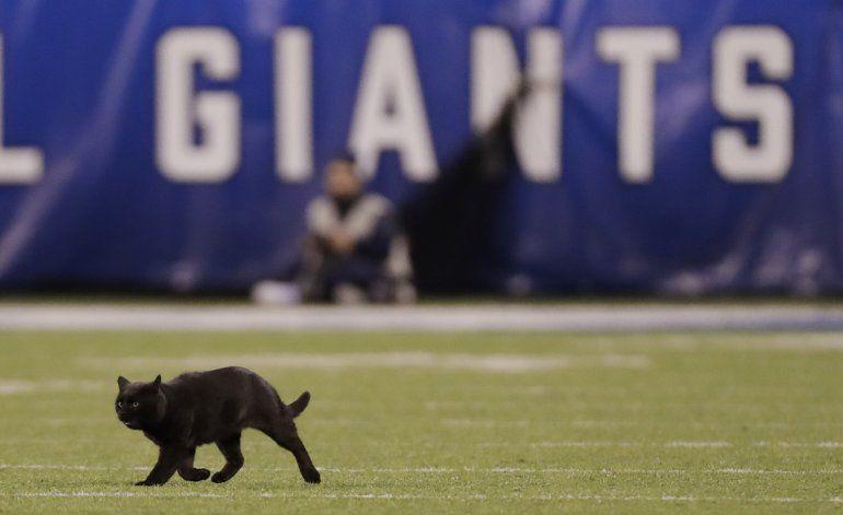 Gato que robó reflectores en MetLife Stadium sigue suelto