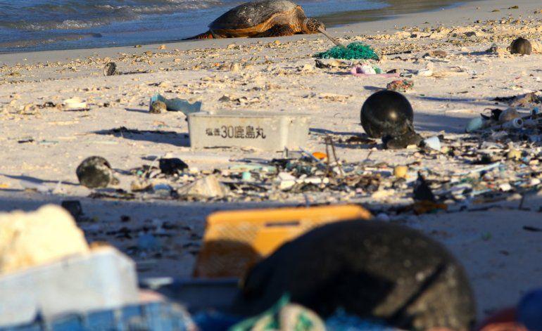 Plástico contamina refugio de aves marinas en el Pacífico