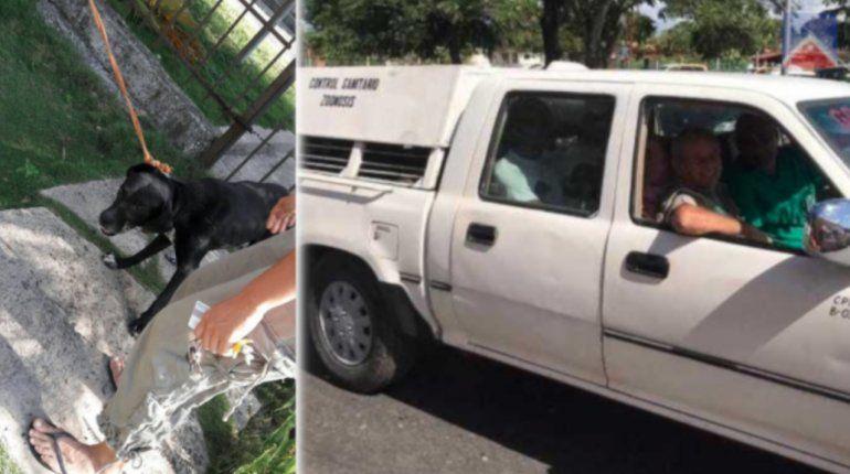 Conmoción en Cuba tras la matanza de perros callejeros por la visita de los reyes de España