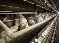 china levanta bloqueo de 5 anos a productos avicolas de eeuu