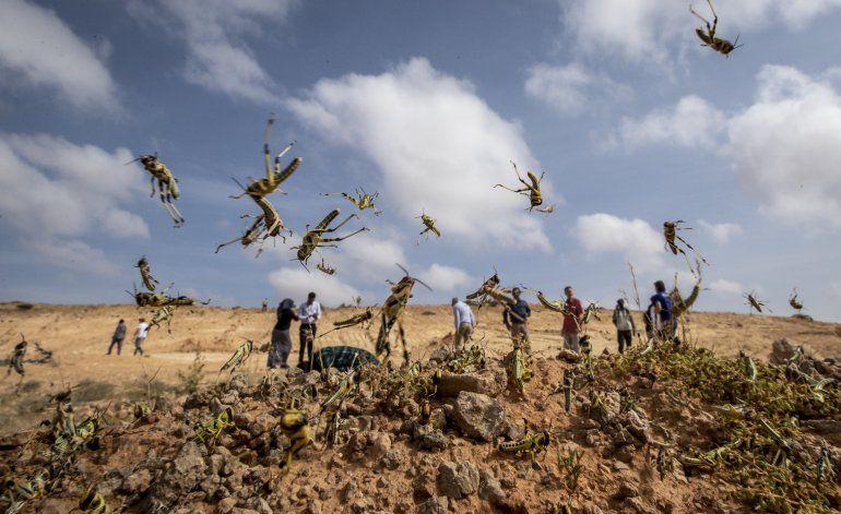 Brote de langostas en África llega a Uganda