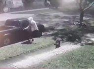 arrestan a un joven que se hacia acompanar por su perro pitbull para robar en hialeah