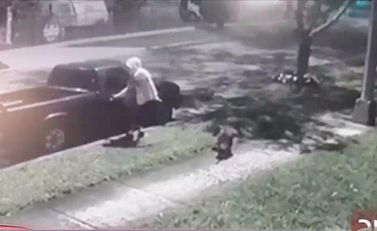 Arrestan a un joven que se hacía acompañar por su perro pitbull para robar en Hialeah
