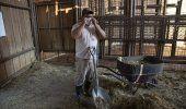 Zoo de Guatemala intenta mantener normalidad pese a COVID-19