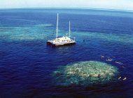 blanqueamiento de gran barrera de coral en su punto mas alto