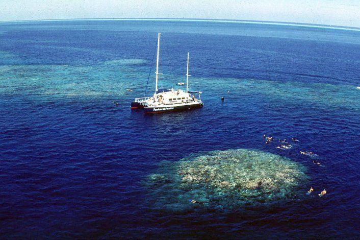 Blanqueamiento de Gran Barrera de Coral en su punto más alto