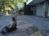 galapagos abre parcialmente sitios de visita para turistas