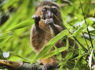 coronavirus trastorna defensa mundial de especies en peligro