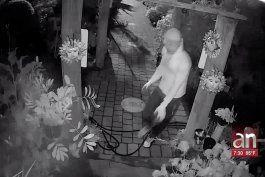 ladron quedo captado en camara robando aves exoticas