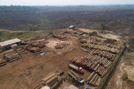 brasil: corporaciones piden frenar tala ilegal en amazonia