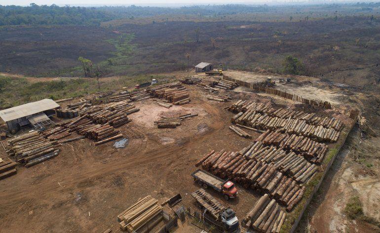 Brasil: Corporaciones piden frenar tala ilegal en Amazonía