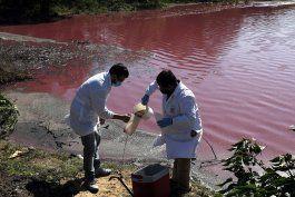 contaminacion tine de purpura laguna en paraguay