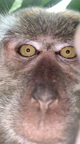 Mono se roba celulular, se toma selfies