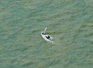 una ballena logra salir de un rio australiano con cocodrilos