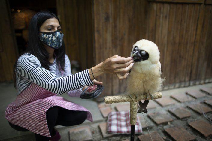 Venezolanos retan pandemia para salvar animales silvestres