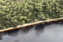 rescatan a 88 de las ballenas varadas en australia