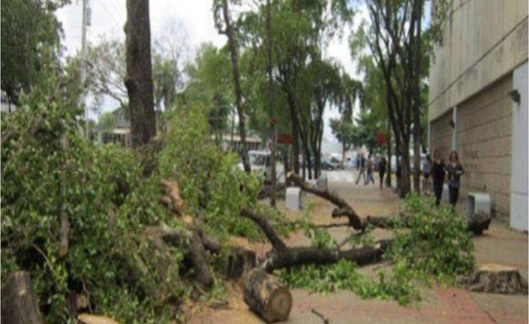 Le sale bien caro corte de árboles a funcionario de ACAA