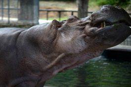 revelan hallazgos de investigacion en zoologico de mayagüez