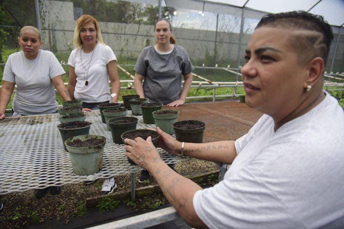 Cultivan girasoles desde la cárcel