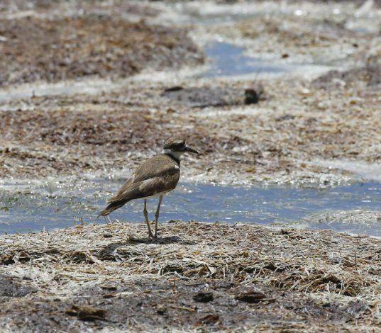 La sequía moderada registra una leve disminución en la isla